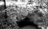 vandalism and criminal damage